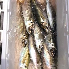 4月 27日(金) アジ釣り・ウタセ真鯛の写真その3