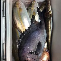 4月29日(日)午後便・ウタセ真鯛の写真その5