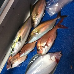4月29日(日)午後便・ウタセ真鯛の写真その6