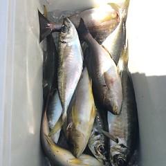 5月6日(日)午前便・アジ釣り 午後便・ウタセ真鯛の写真その1