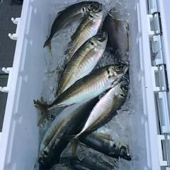 5月6日(日)午前便・アジ釣り 午後便・ウタセ真鯛の写真その2
