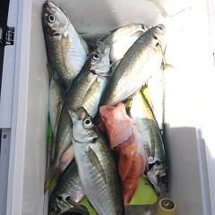 5月6日(日)午前便・アジ釣り 午後便・ウタセ真鯛の写真その3
