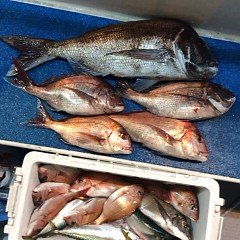 5月11日(金)午後便・ウタセ真鯛の写真その5