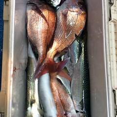 5月11日(金)午後便・ウタセ真鯛の写真その7
