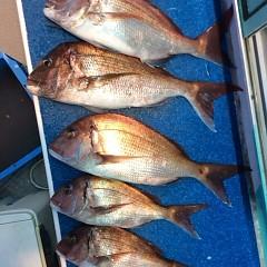 5月14日(月)午後便・ウタセ真鯛の写真その10