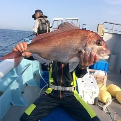 5月15日(火)午後便・ウタセ真鯛の写真その5