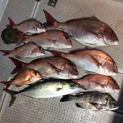 5月15日(火)午後便・ウタセ真鯛の写真その8