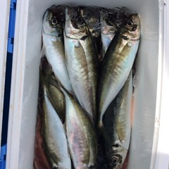 5月16日(水)午前便・アジ釣り・午後便・ウタセ釣りの写真その1