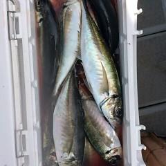 5月16日(水)午前便・アジ釣り・午後便・ウタセ釣りの写真その2