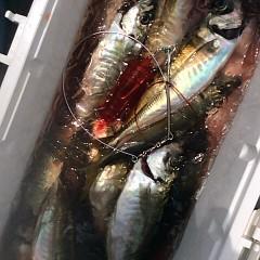 5月16日(水)午前便・アジ釣り・午後便・ウタセ釣りの写真その3