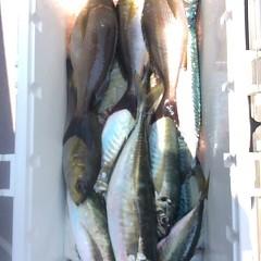 5月18日(金)午前便・アジ釣り・午後便・ウタセ真鯛の写真その2