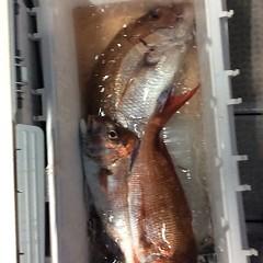 5月21日(月)午後便・ウタセ真鯛の写真その8