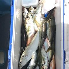 5月25日(金)午前便・アジ釣り午後便・ウタセ真鯛の写真その5