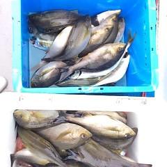 5月28日(月)午前便・アジ・イサキ釣りの写真その3
