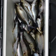 5月31日(木)午前便・イサキ釣りの写真その5