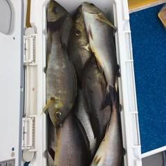 5月31日(木)午前便・イサキ釣りの写真その7