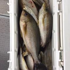 5月31日(木)午前便・イサキ釣りの写真その10