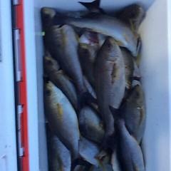 6月13日(水)午後便・イサキ釣りの写真その1
