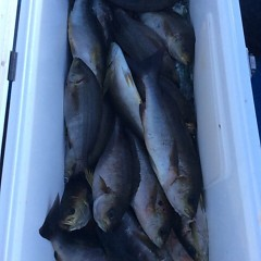 6月13日(水)午後便・イサキ釣りの写真その2