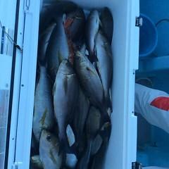 6月13日(水)午後便・イサキ釣りの写真その4