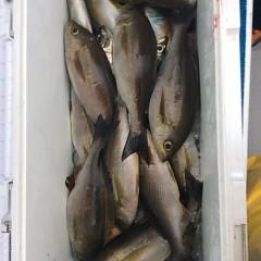 6月14日(木)午後便・イサキ釣りの写真その2
