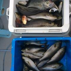 6月14日(木)午後便・イサキ釣りの写真その5