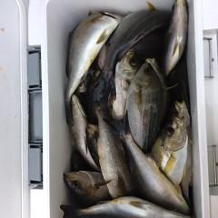 6月15日(金)午前・午後便・イサキ釣りの写真その1
