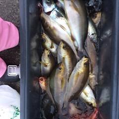 6月15日(金)午前・午後便・イサキ釣りの写真その9