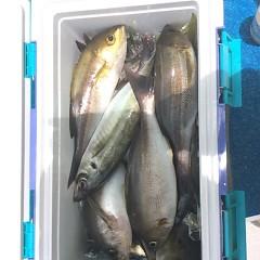 6月16日(土)午前・午後便・イサキ釣りの写真その4