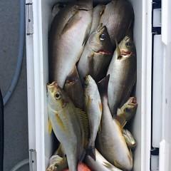 6月17日(日)午後便・イサキ釣りの写真その11
