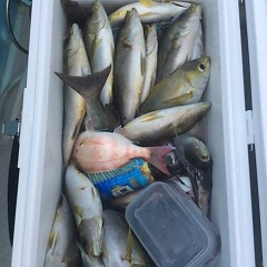 6月17日(日)午後便・イサキ釣りの写真その12