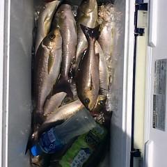 6月27日(水)午前便・イサキ釣りの写真その5
