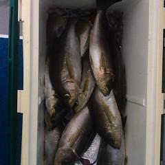 7月6日(金)午後便・イサキ釣りの写真その8