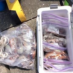 7月12日(木)1日便・スルメイカ釣りの写真その11