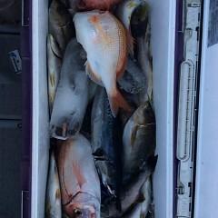 7月14日(土)午前・午後・イサキ釣りの写真その9