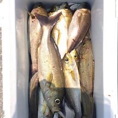 7月16日(月)午前便・イサキ釣りの写真その6