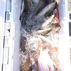 7月16日(月)午前便・イサキ釣りの写真その7