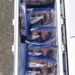 7月21(土)1日便・スルメイカ釣りの写真その8