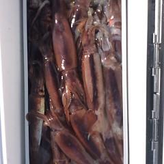8月6日(月)1日便・スルメイカ釣りの写真その1