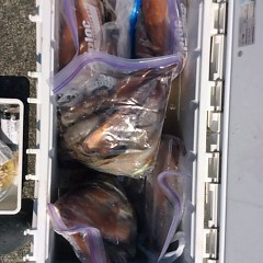 8月6日(月)1日便・スルメイカ釣りの写真その2