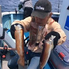 8月 11日(金) 1日便・スルメイカ釣りの写真その2