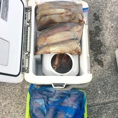 8月 11日(金) 1日便・スルメイカ釣りの写真その5