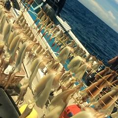 8月 13日(月) 1日便・スルメイカ釣りの写真その4