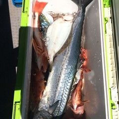 8月 17日(金) 午前便・タテ釣りの写真その12