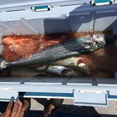 タテ釣りの写真その2