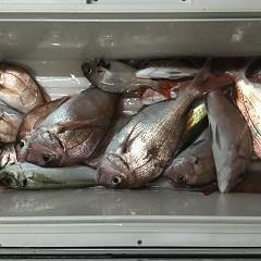 8月 31日(金) 午後便・ウタセ真鯛の写真その4