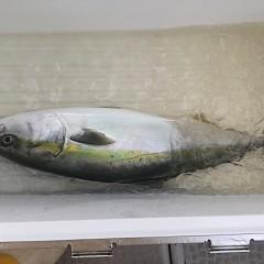 9月10日(月) 午前便・タテ釣りの写真その2