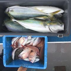 9月11日(火) 午後便・ウタセ真鯛の写真その6