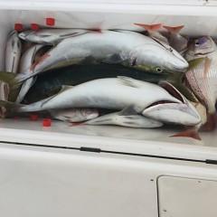 9月11日(火) 午後便・ウタセ真鯛の写真その8