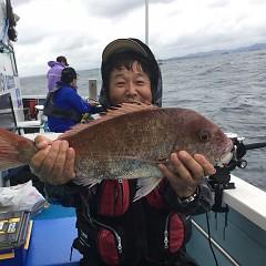 9月14日(金) 午後便・ウタセ真鯛の写真その3